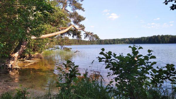 Белое озеро возле деревни Костуя
